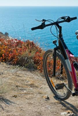 Renewal Bikes